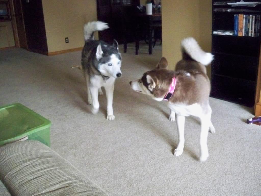 Dakota and Willow Thread 100_0624
