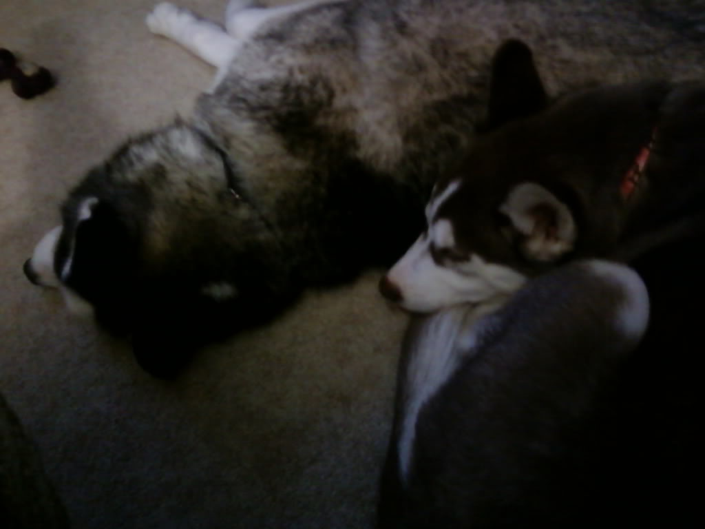 Dakota and Willow Thread 1127102206-01