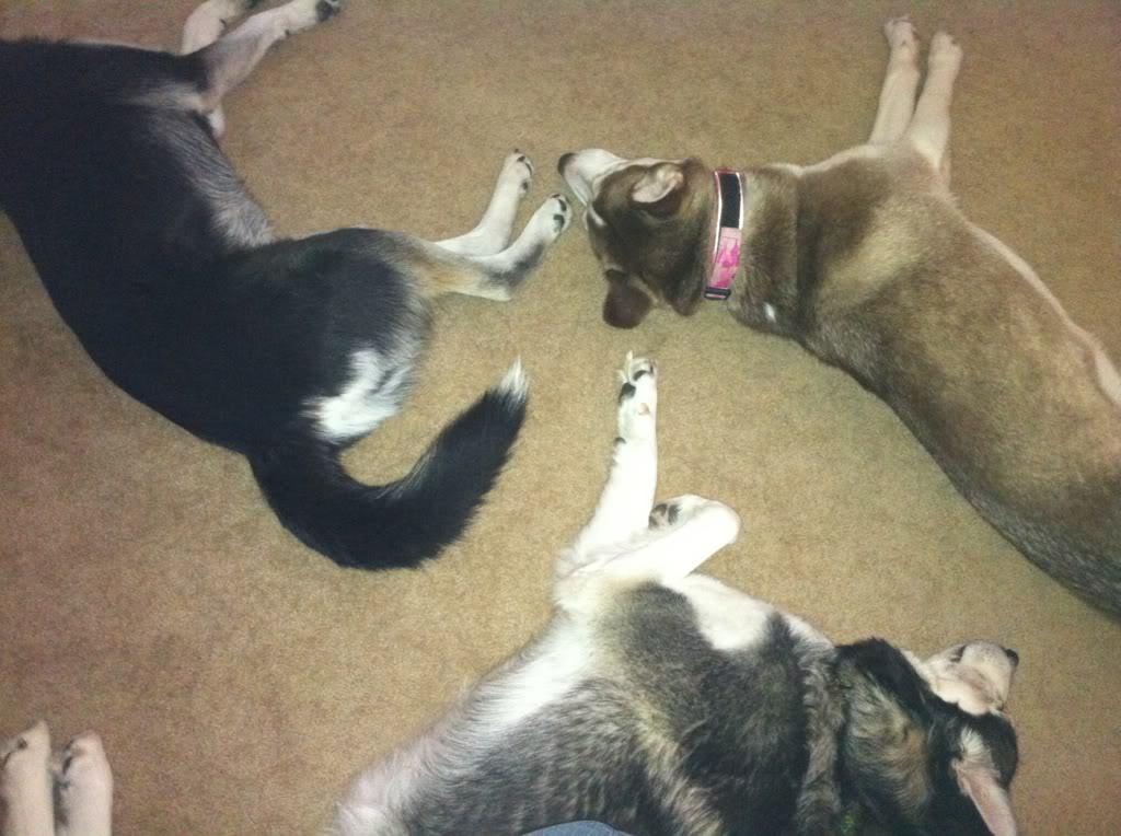 Willow, Aspen & the cat 16cf2719