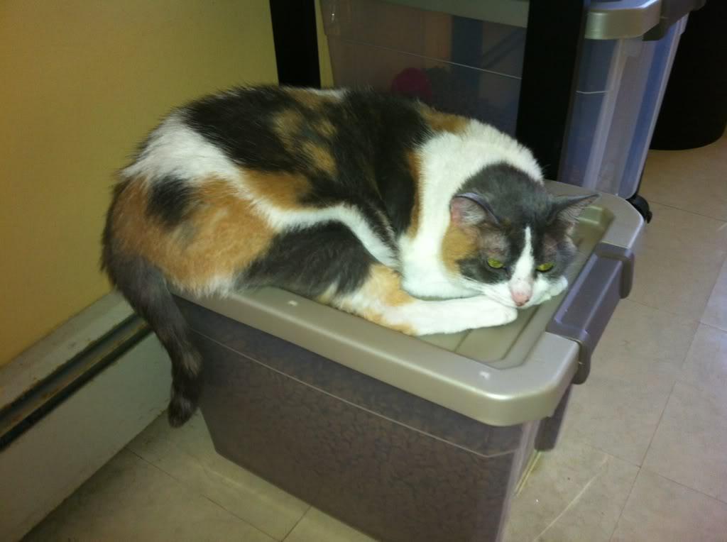 Willow, Aspen & the cat 1fa83317