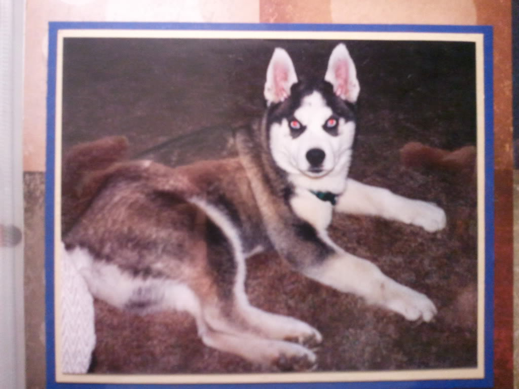 My Beautiful Dakota 2012-01-09200821