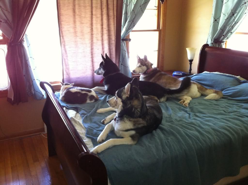 Willow, Aspen & the cat 59d64cc3