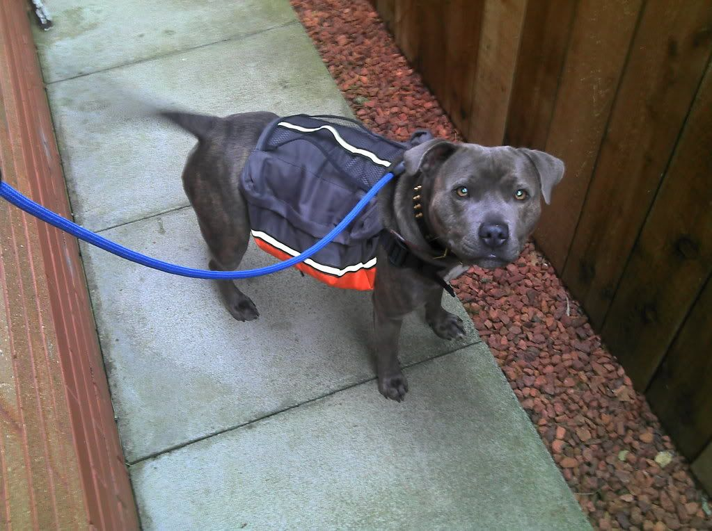 dog backpacks 1061712097_photobucket_50371_