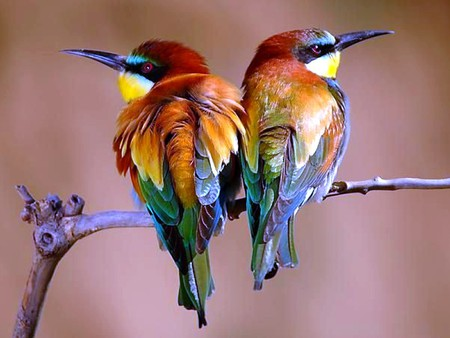 கவலை மறக்கும் காட்சிகள் அழகிய பறவைகள் சில.. 298262-bigthumbnail-Copy