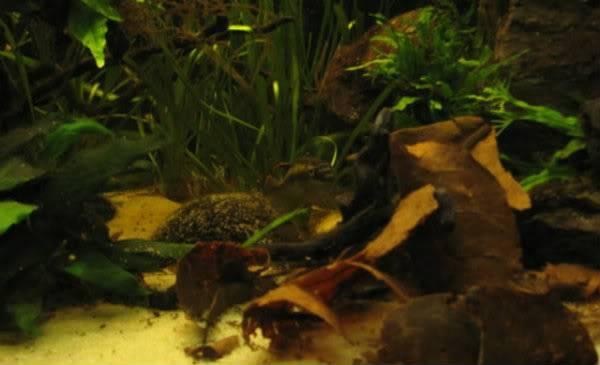 """Concours photos """"le poisson et son environnement aquatique"""" - Oscar le poisson  - Page 3 IMG_1208hx"""