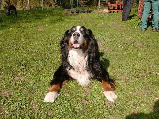 Der Hundethread K-CIMG0627