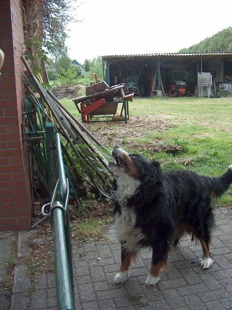 Der Hundethread - Seite 2 K-HPIM2730