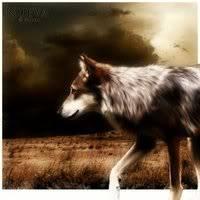 Finches Dark Alley Brownwolf