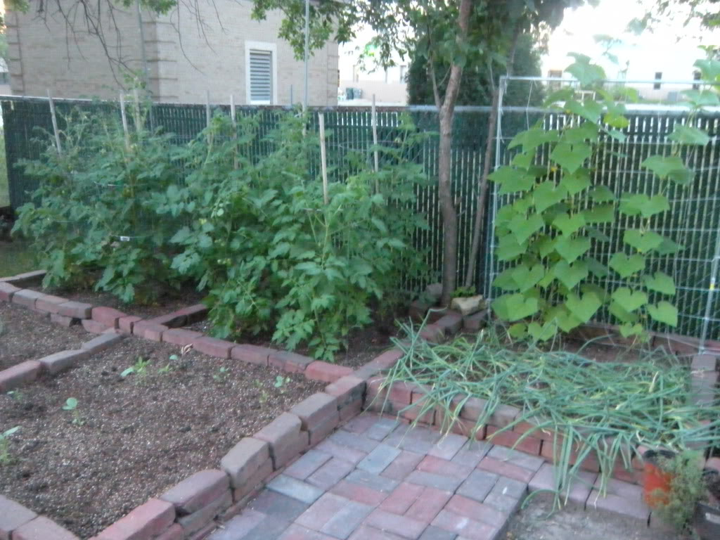 My garden pictures I promised. DSCN7015