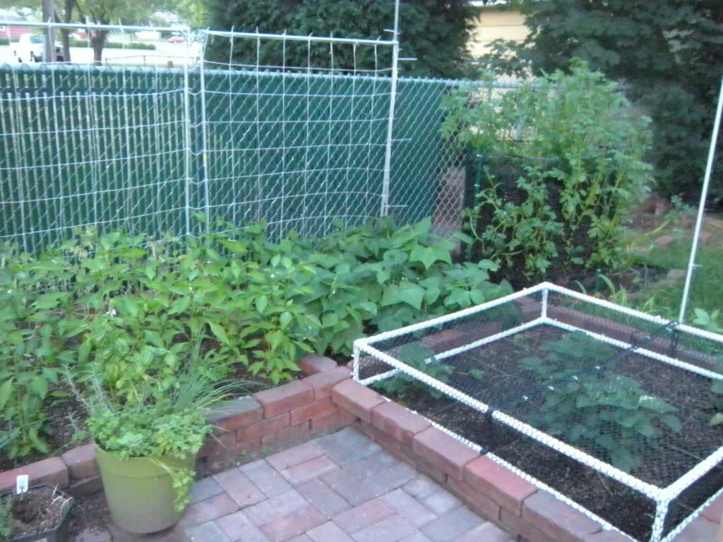 My garden pictures I promised. DSCN7017