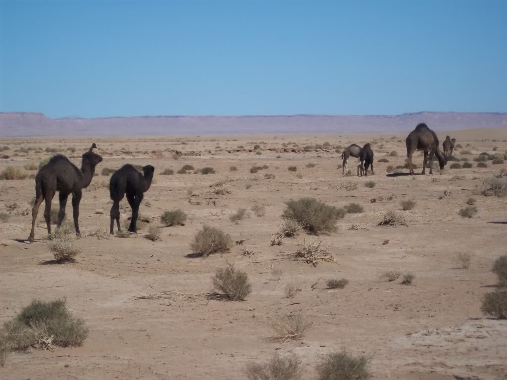 Pics of places that look like places from the films, or are just nice. Morocco2011192