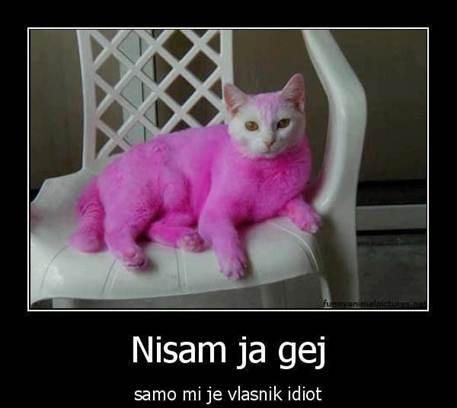 Smijesne Slike Macka_zps78643805