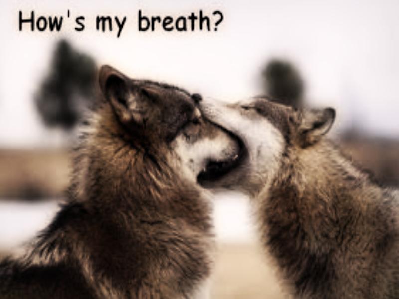 Random Meme's Funnywolves