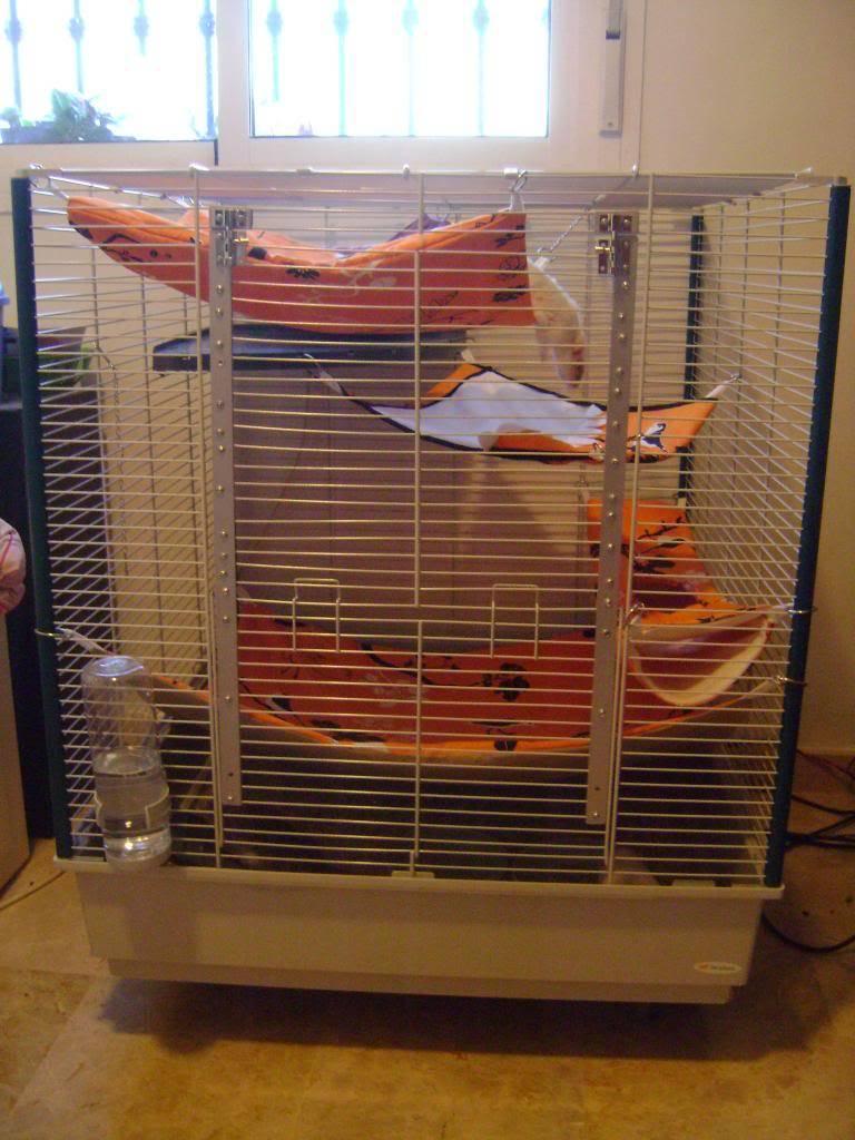 Choix d'une nouvelle cage - Page 2 DSC00787_zpsb601e257