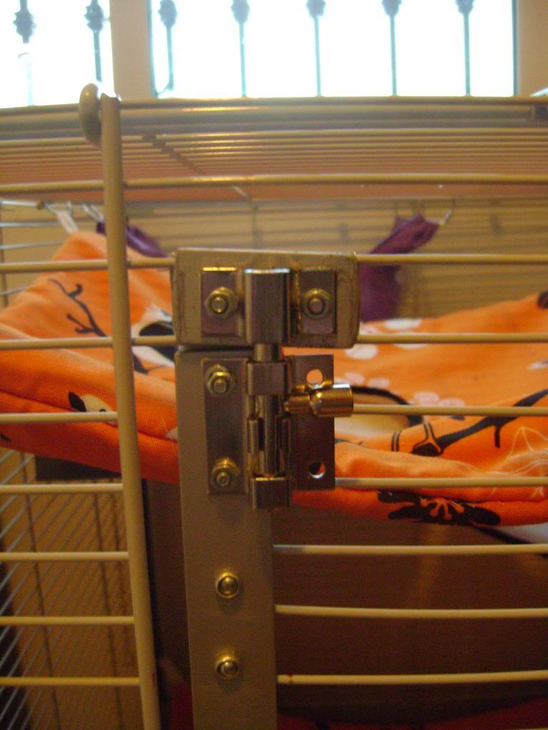 Choix d'une nouvelle cage - Page 2 DSC00789_zps6fa4c158
