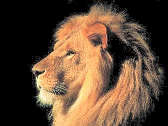 A Last Leap Lion