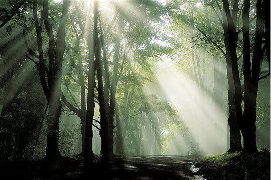 Forêts interdite