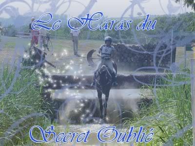 Mon Elevage de Chevaux