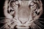 elina avatarid ~ uued 26.10  13-1