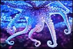 elina avatarid ~ uued 26.10  20-2