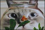 elina avatarid ~ uued 26.10  50