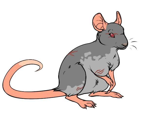 Dress-Up Dolls Rat