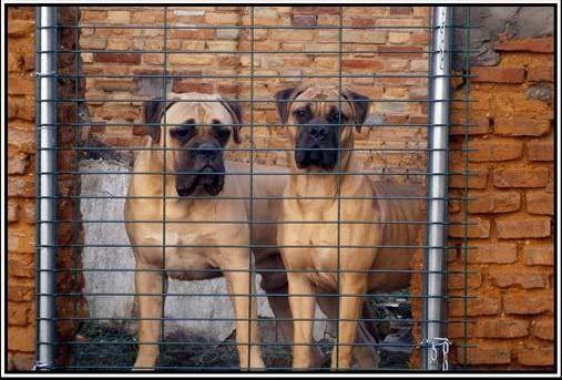Trol y Brigitte, a sus 9 meses y medio y nueve meses y pocos dias respectivamente Trolybrigitte