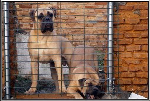 Trol y Brigitte, a sus 9 meses y medio y nueve meses y pocos dias respectivamente Trolybrigitte1
