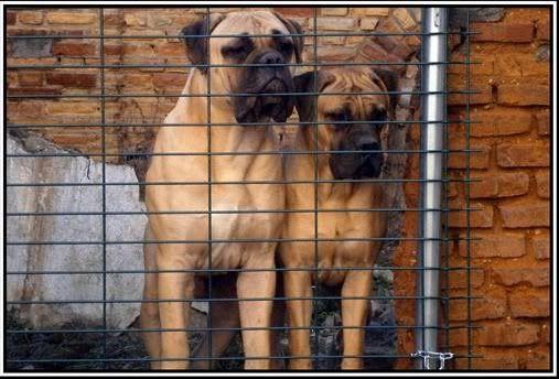 Trol y Brigitte, a sus 9 meses y medio y nueve meses y pocos dias respectivamente Trolybrigitte2