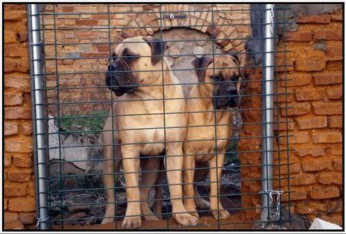 Trol y Brigitte, a sus 9 meses y medio y nueve meses y pocos dias respectivamente Trolybrigitte3