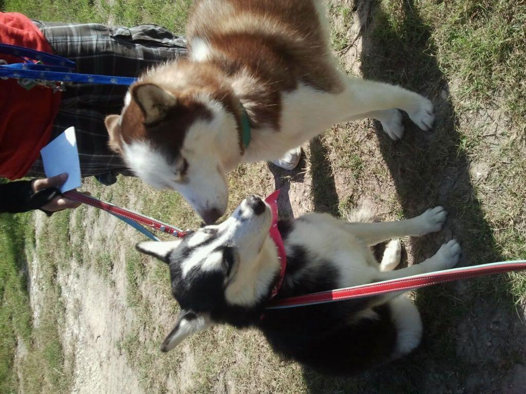 Kya Lynn & Rio Azul! UPDATED 10/6/2012 2f585219