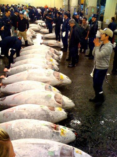 [Đời sống - Văn hóa] 15 đam mê của người Nhật Tuna-fish1851412630554783694_zps0a3a8025