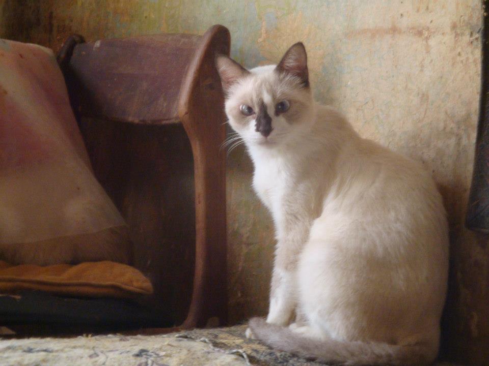 30 Γάτες Συλλέκτριας αναζητούν καλό σπιτάκι... 229420_471381576216620_2094445398_n