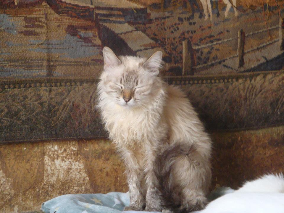 30 Γάτες Συλλέκτριας αναζητούν καλό σπιτάκι... 527407_471383726216405_1369979598_n