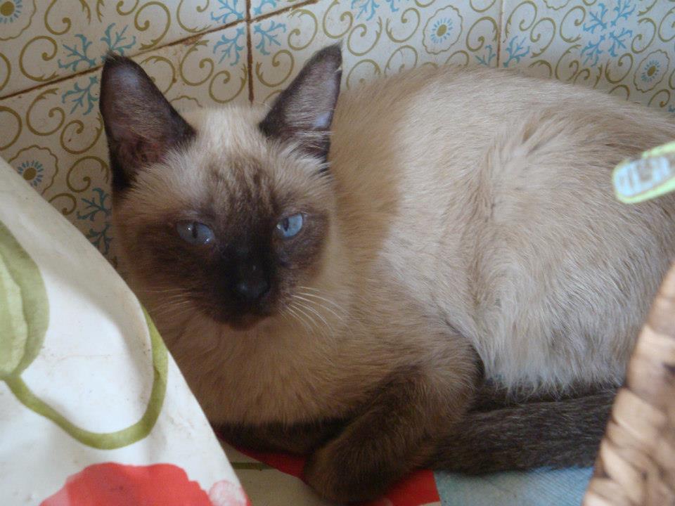 30 Γάτες Συλλέκτριας αναζητούν καλό σπιτάκι... 577367_471384246216353_1602976421_n