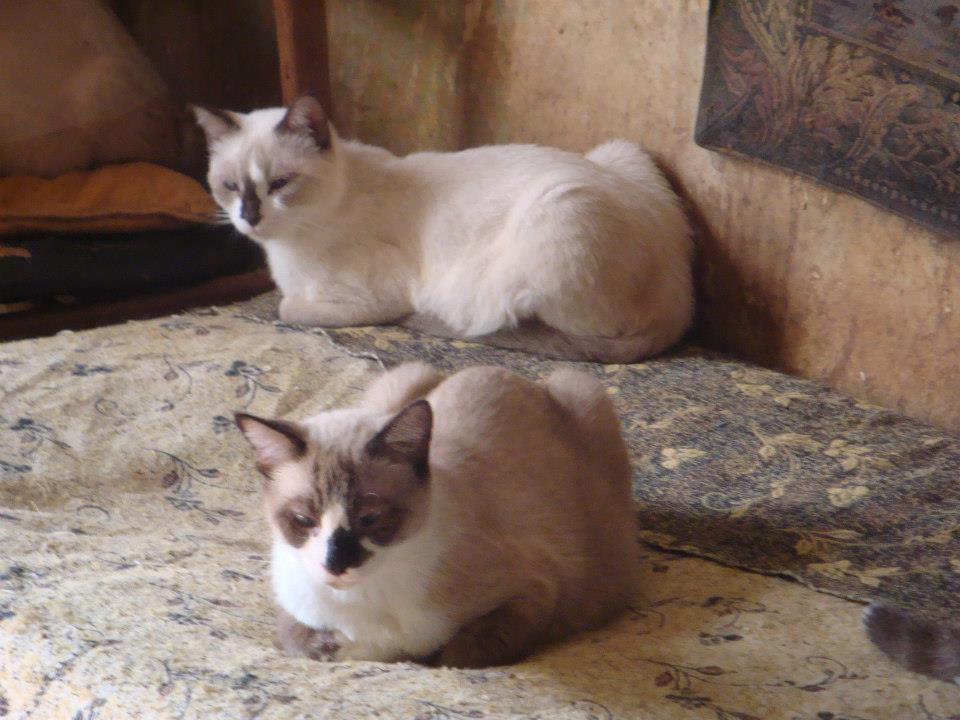 30 Γάτες Συλλέκτριας αναζητούν καλό σπιτάκι... 602429_471382076216570_2118147578_n