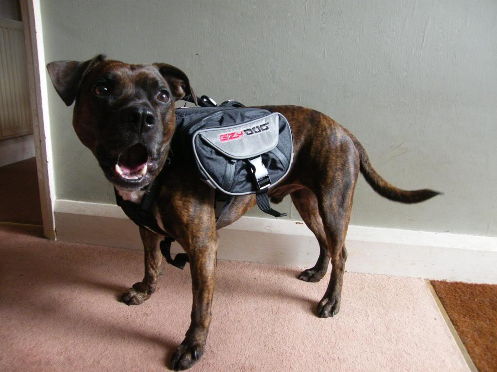 Ezydog Summit Backpack DSCF9742_zps911896f2