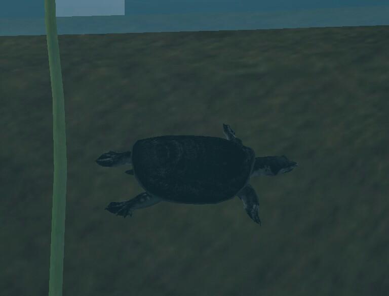 Tortuga de Caparazón Blando del Yangtze / Chinese Softshell Turtle Ygst-picsay_zps3191ba4b