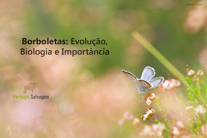 Borboletas: Evolução, Biologia e Importância Borboletas_zps6gsbppsf