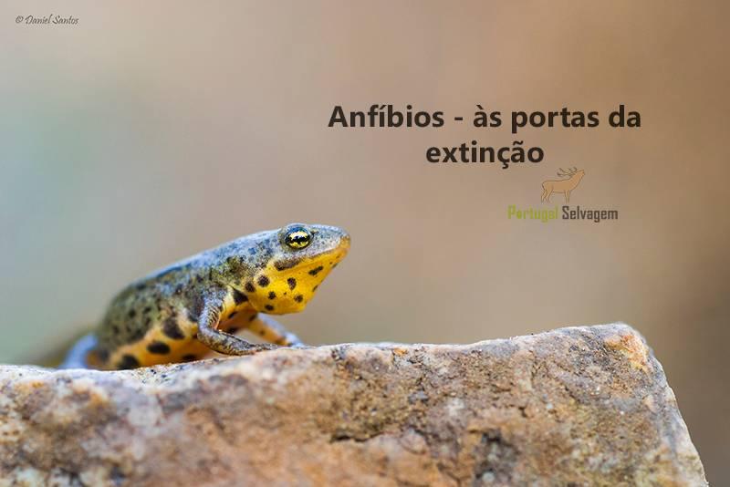 Anfíbios - às portas da extinção Tritao_ventre_laranja_janeiro_2014%20%2041_zpsmgqc9nrw