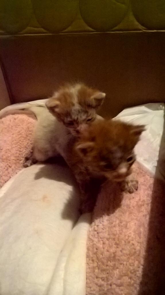 Χαρίζονται δύο μωρά γατάκια 2002eae0-c1a6-4e21-9bf6-23a97e3df3b3_zps8rmttrcb
