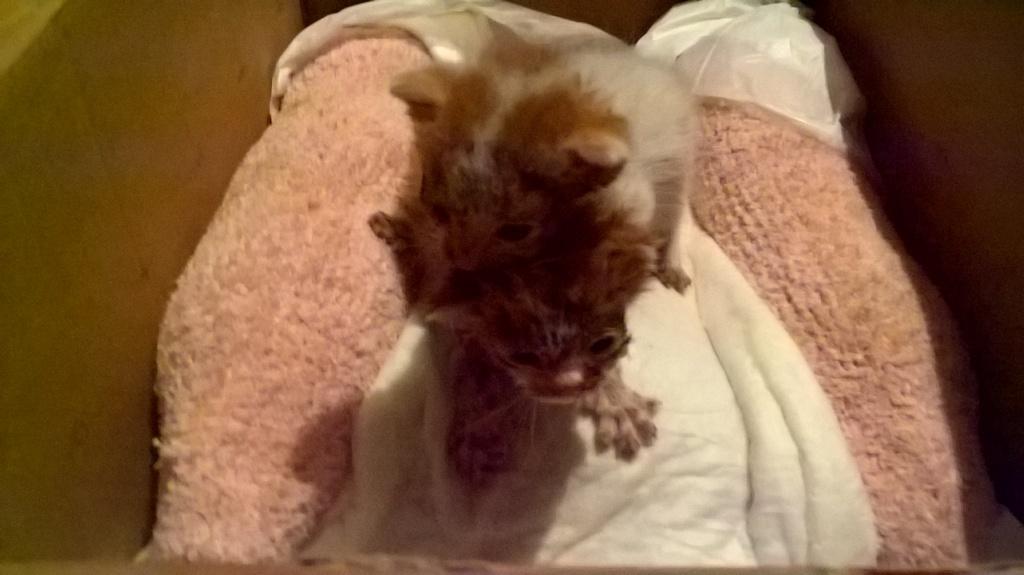 Χαρίζονται δύο μωρά γατάκια WP_20160829_19_10_00_Pro_zpspk8x5r7b