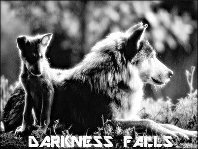 darknessxfalls { a wolf rp } Ad
