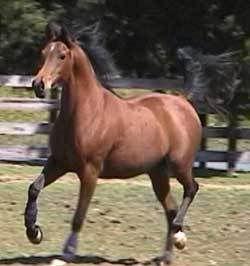 UPPPPPP FOOOORRRR SSSSAAAAAAAALLLLLLLLEEEEEE Horse6777569