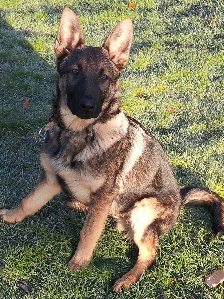 Odie 6 month old special lad homed 150735_138263346341603_1240268442_n_zpsc994a4c9
