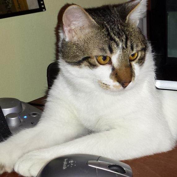 Χαρίζεται πανέμορφο γατάκι - Θεσσαλονίκη 20140412_224706_zps1c9e1424