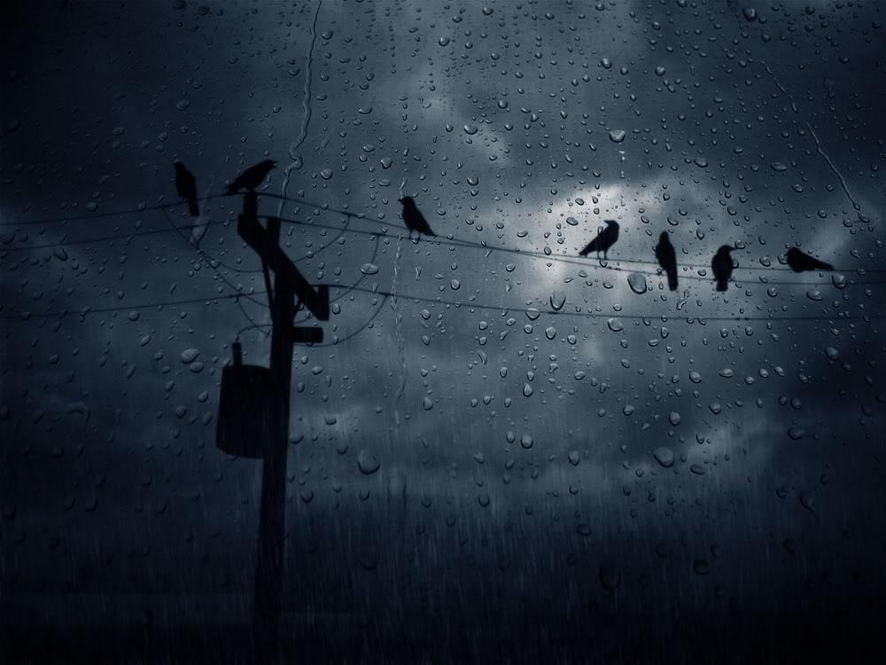Giọt mưa trên kiếng REDSVN-Rain-16