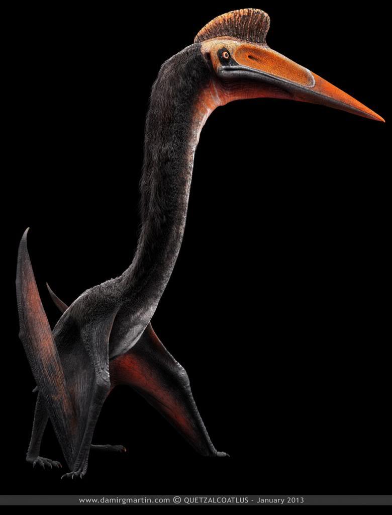 Hình ảnh tuyệt đẹp về thế giới loài khủng long Redsvn-Dinosaur-12