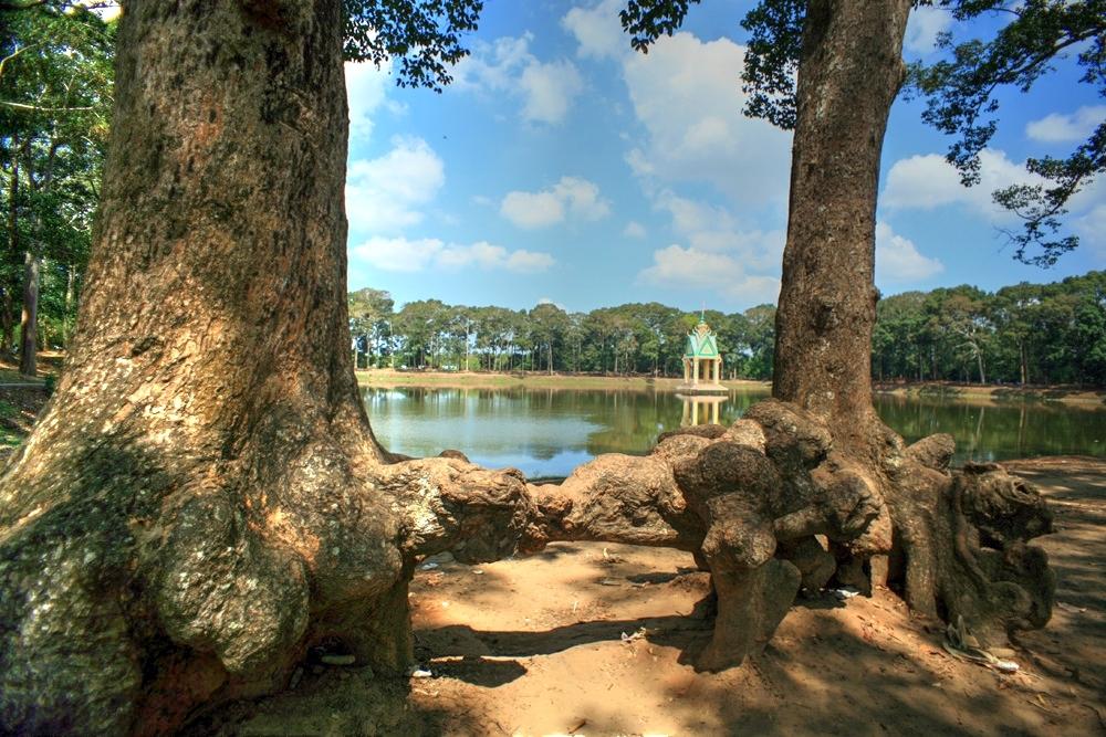 Lạc vào rừng cổ thụ kỳ quáigiữa thành phố ở Việt Nam Redsvn-Ao-Ba-Om-02