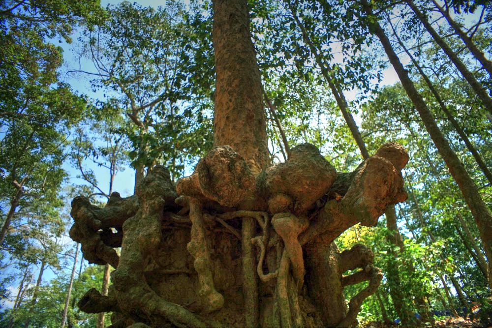 Lạc vào rừng cổ thụ kỳ quáigiữa thành phố ở Việt Nam Redsvn-Ao-Ba-Om-03
